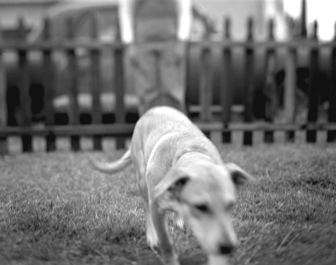 08-dogs_lucky